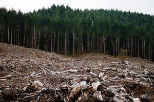 Illegal Logging: Multi Billion Dollar Transactions Hiding in Plain Sight