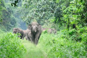 elephants in a forest in India