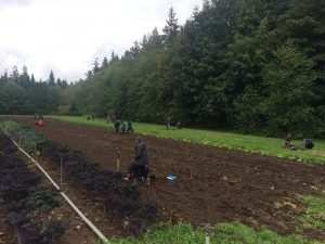 Soil Fertility Assessment for the UBC Farm