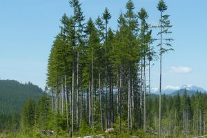 Effect of Variable Retention Harvesting on Soil Microbial Communities in Coastal BC Forests