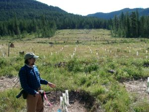 Soil Fauna on the Long-term Soil Productivity Sites in BC