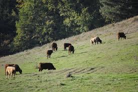 Soil Fauna and Rangelands