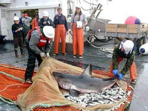 Legal Rights of Sharks along Canada's West Coast