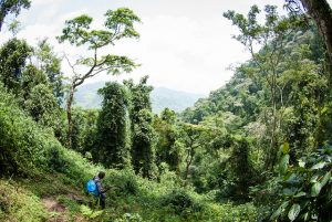 An Assessment of the Land Claims and Rights of the Ogiek (Muthoni Wanyeki) in the Mau and Mt. Elgon Forests of Kenya