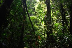 Green Beauty Forest Trees Ecuador Nature Jungle