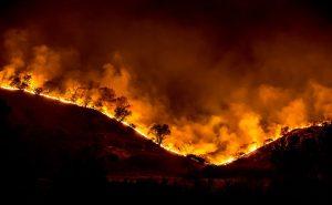 Woolsey_Fire_-_tree_ridge_in_flames_20181119-PB-008