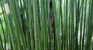 Assessing the management of moso bamboo (Phyllostachys edulis) forests by collective economic organizations in Linan, Zhejiang Province, China